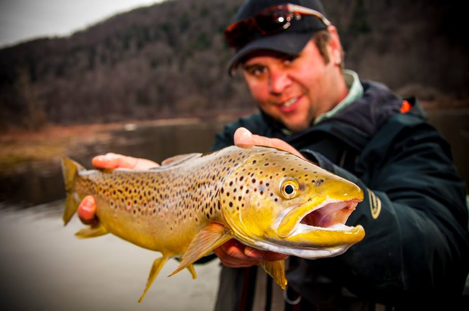 A Brown Trout